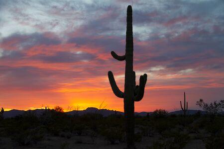 Saguaro setting sun