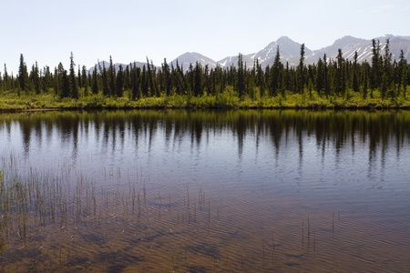 reflection of trees in lake Stock Photo