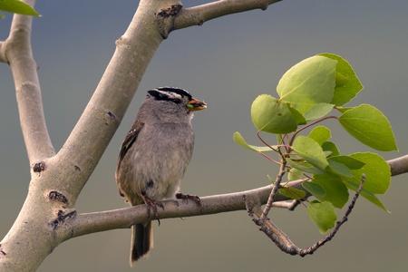bird ready to feed