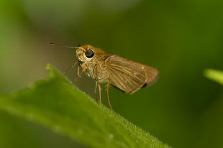 moth on green leaf Reklamní fotografie