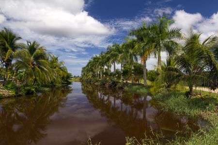 palmtrees along the river Stock Photo