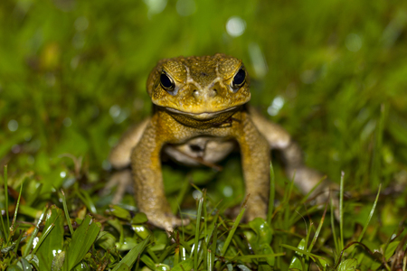 frog staring at me Stock Photo