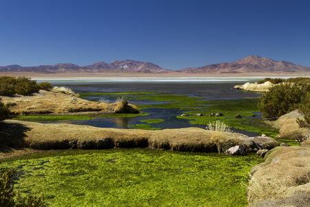 landscape at the Salar de Taras