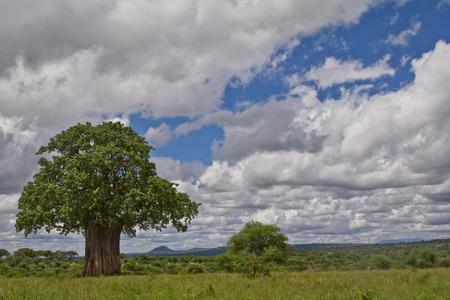 A baobab tree with a cloudy sky on the Serengeti savannah of Tanzania