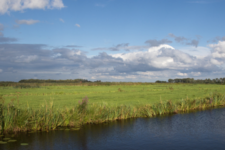 polder: Typical green and wet polder landscape in The Netherlands Stock Photo