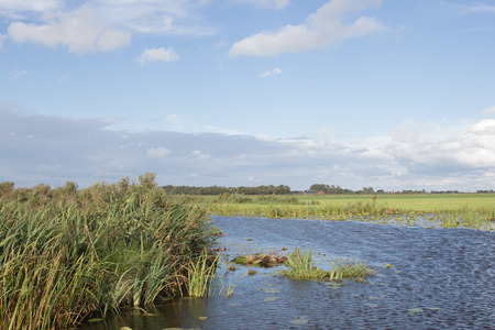 polder: Typical polder landscape with canals and reeds in The Netherlands