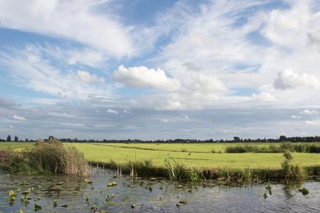 polder: Typical Dutch polder landscape in the evening sun