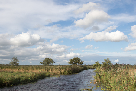 polder: Polder landscape with canals, reeds and trees in The Netherlands