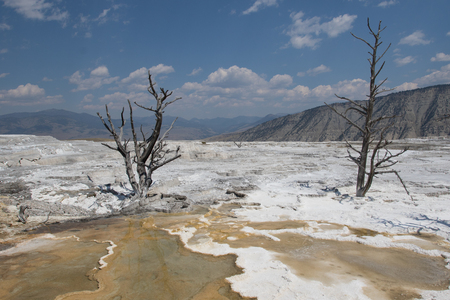 dissolve: White Mammoth landscape with dead trees