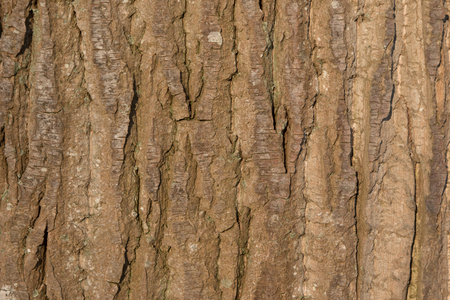 Close up of the bark of a large tree basking in the sun 写真素材