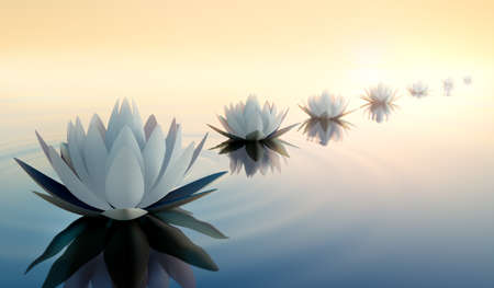 White lotus flowers in a calm sea at sunset - 3D illustration