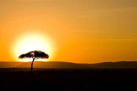sunrise behind the tree photo