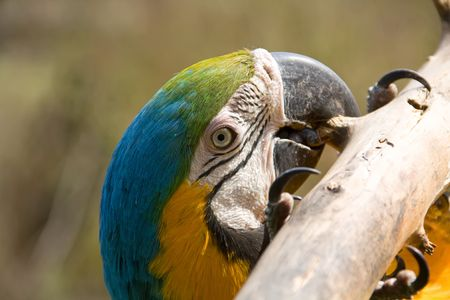 portrait of a macaw parrot Stock Photo