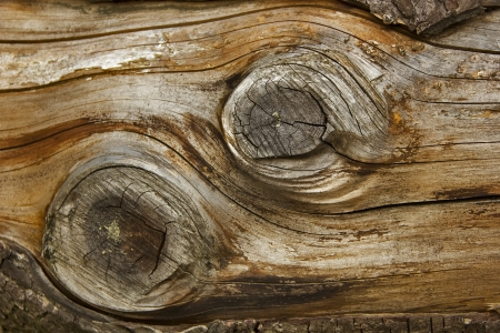 old debarked peace of wood