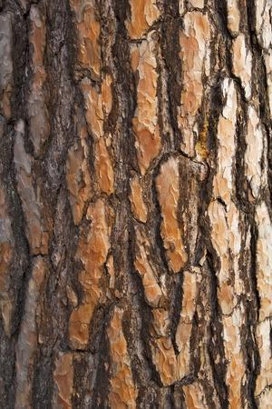 feld: tree bark