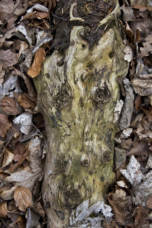 old peace of wood