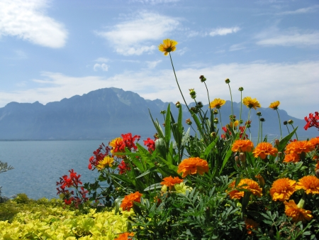 Flowers of Geneva lake. The Embankment in Montreux. Switzerland.