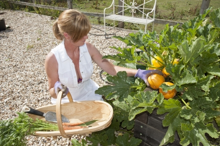Woman working in garden collecting fresh produce from a raised bed