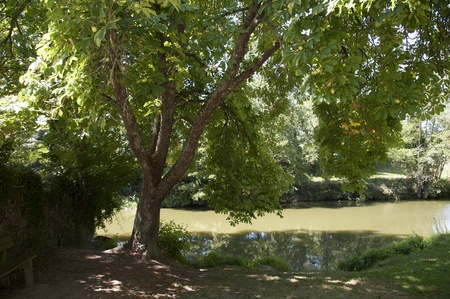 vendee: Horse Chestnut tree on the banks of La Vie at Apremont France