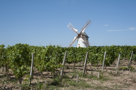 vendee: Windmill standing in a vineyard at Rosnay in the Vendee region of France Stock Photo