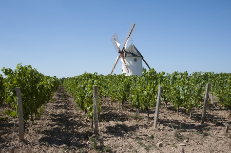 Windmill standing in a vineyard at Rosnay in the Vendee region of France photo