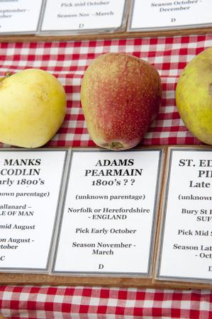 adams: Adams Pearmain apple dates from the 1800 Stock Photo