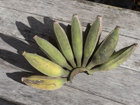 Hand of home grown Bananas New Zealand