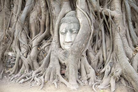 buddha head: Buddha head entwined in tree roots Ayutthaya Thailand