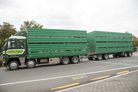 Truck and trailer transporting livestock North Island New Zealand Editorial