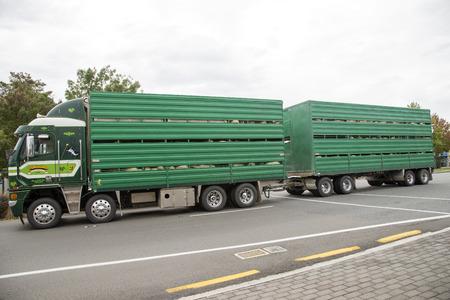 Truck and trailer transporting livestock North Island New Zealand 新聞圖片