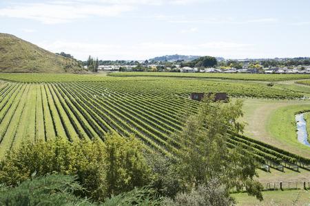 Mission Estate Winery in Taradale Hawkes Bay-Region Nordinsel von Neuseeland Standard-Bild - 28826615
