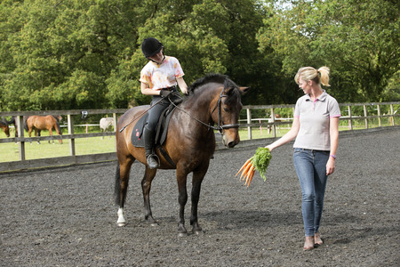 Using a bunch of carrots to train a pony and rider Stock Photo - 29655237