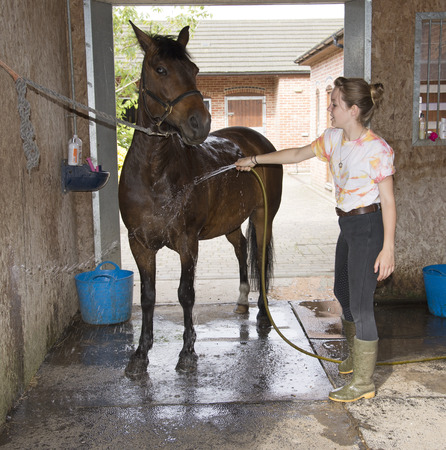 Young female rider washing down her pony in the stable yard Imagens - 29679642