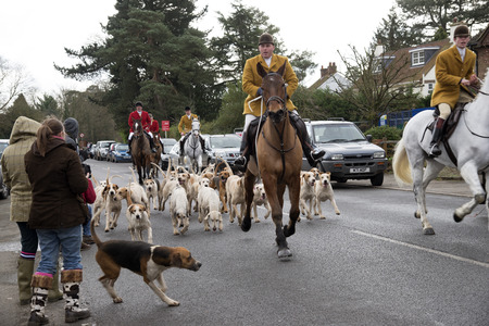 hounds: Kimblewick Hunt meeting at Mortimer near Reading England UK earlier today Saturday 27 December 2014 Whipper in with the hounds