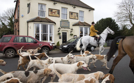 hounds: Kimblewick Hunt meeting at Mortimer near Reading England UK earlier today Saturday 27 December 2014 Whipper in with the hounds outside the Horse and Groom pub