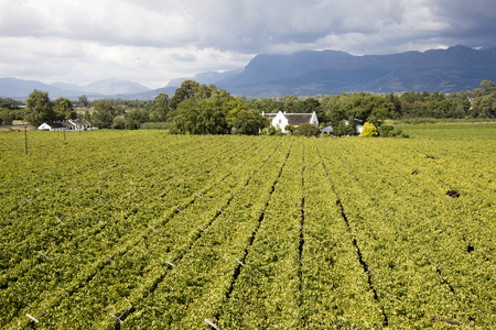 Manor House and vineyards in Paarl western Cape South Africa