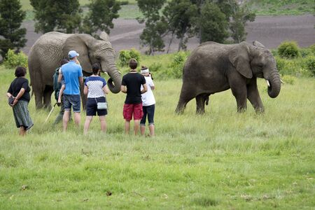 educational research: Wildlife ranger with visitors viewing African Elephants in South Africa