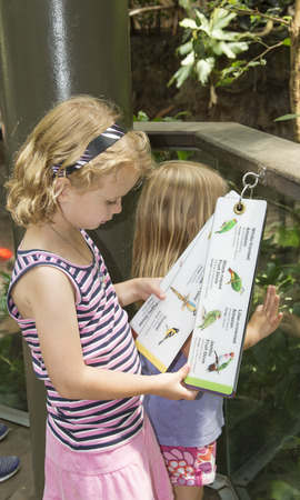 species: Child identifying bird species at a zoo