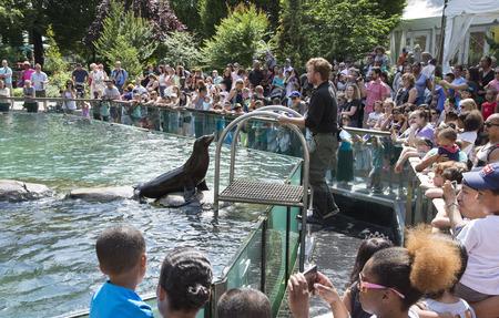 entertain: Sea Lions entertain visitors at Central Park Zoo Manhattan New York USA
