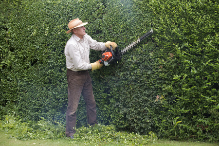 Cutting garden hedge with a petrol hedgecutter Stock Photo