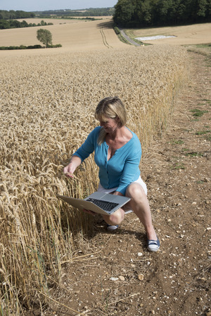 surveying: Woman with laptop surveying wheat almost redy for harvesting England UK Stock Photo