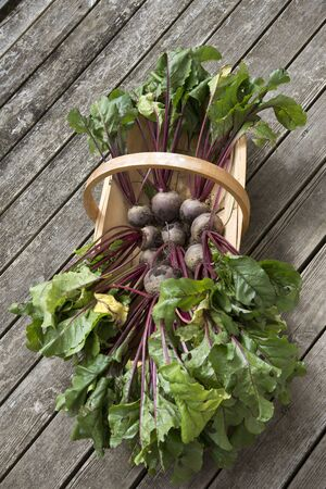 freshly picked: Freshly picked beetroot in a wooden garden trug Stock Photo