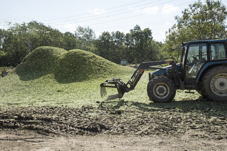 chaff: Chaff from the hops is blown into piles to be used as fertilizer on a hop garden in Kent England UK.