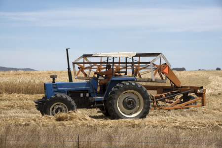 Harvesting wheat using a tractor and a row crop cutter in the Swartland region of South Africa Editoriali