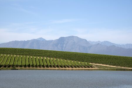 Water vines and mountains at Riebeek Kasteel in the Swartland region South Africa Archivio Fotografico