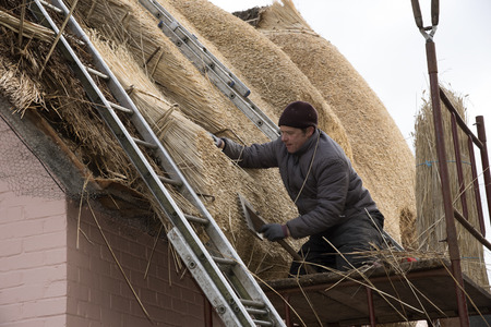 Thatcher using a leggett to dress the combed wheat reed on the roof of a house Stock Photo