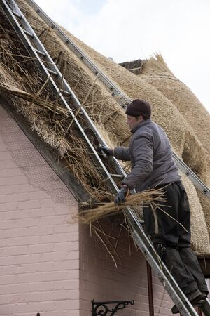replacing: Thatcher removing old wheat reed before replacing with new on a roof