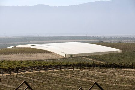 sheeting: RIEBEEK KASTEEL SWARTLAND SOUTHERN AFRICA - APRIL 2016 - Vines under plastic sheeting and vineyard at Riebeek Kasteel in the Swartland region of South Africa Stock Photo