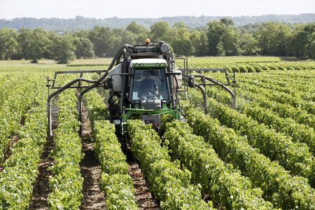 straddle: Medoc France August 2016 - A straddle tractor spraying vines in the Medoc region of France