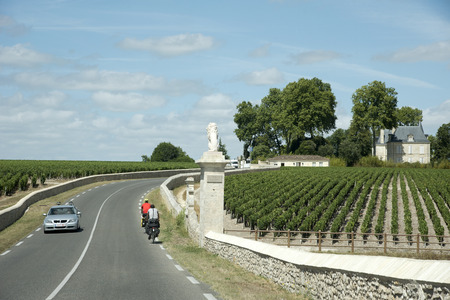 bordeaux region: Pauillac wine region France - August 2016 - Cyclists passing vines and vineyards in Pauillac a wine producing area of the Bordeaux region France